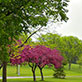 Spring arrives on the UW-Green Bay campus, May 2013