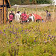 Students in Medieval History Capstone Course visit traditional Viking longhouse, September 21, 2013