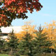 UW-Green Bay, Fall Colors, Oct. 2013
