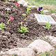 Fifth annual planting of the UW-Green Bay Memorial Garden, May 8, 2014