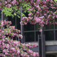 Signs of Spring at UW-Green Bay, May 2014