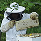 UW-Green Bay student beekeepers, July 2014